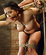 Fucked doggie style in painful predicament bondage